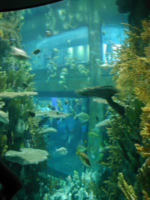 Moody gardens aquarium for Cat proof fish tank